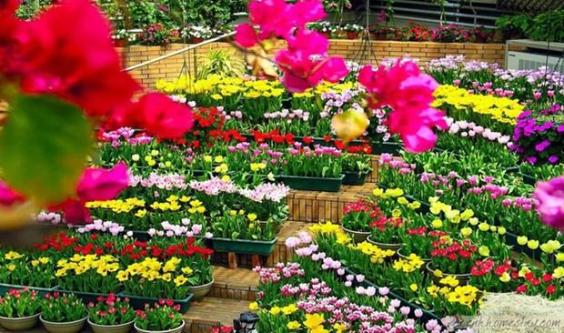 2023年国际花卉节将在广平省举行 投资总额约1.22亿欧元 hinh anh 1