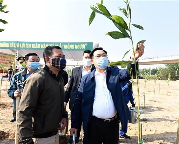 河内市启动2021辛丑年春季植树节活动 hinh anh 1