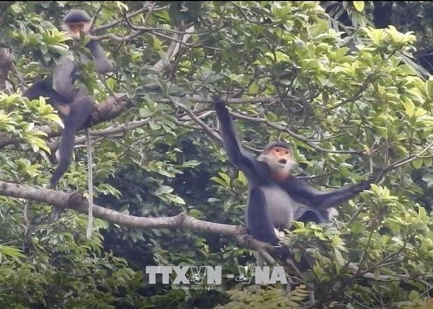 共促民生与稀有动物的栖息地和谐发展 hinh anh 1