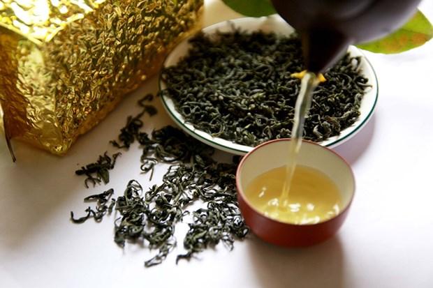越南太原省将茶叶发展成为主要农产品 hinh anh 1