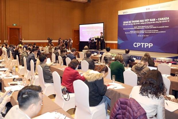 CPTPP协定:为越南与加拿大贸易多样性提供有力支撑 hinh anh 1