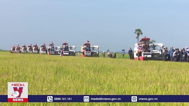 2021年前4个月柬埔寨农产品出口额突破20亿美元 hinh anh 1