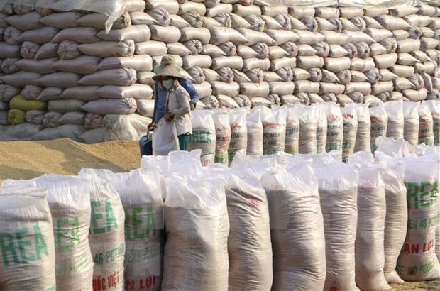 美国农业部预测越南将继续是世界第二大米出口国 hinh anh 1