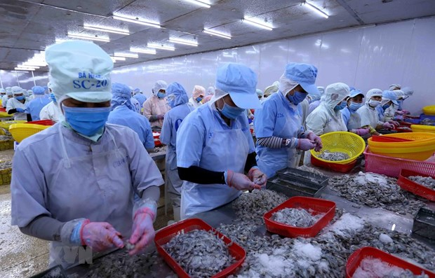 尽管疫情围攻 越南水产品出口仍迎来许多机会 hinh anh 1