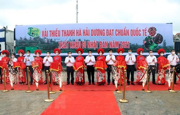 海阳省向新加坡和日本出口2021年的首批荔枝 hinh anh 1