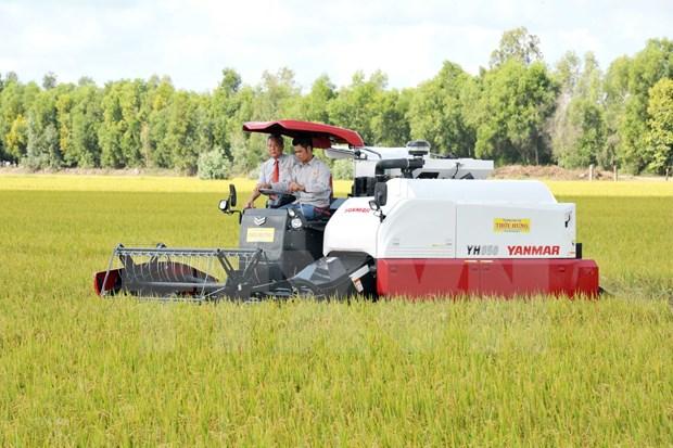 越南稳步向菲律宾出口大米的机会 hinh anh 1
