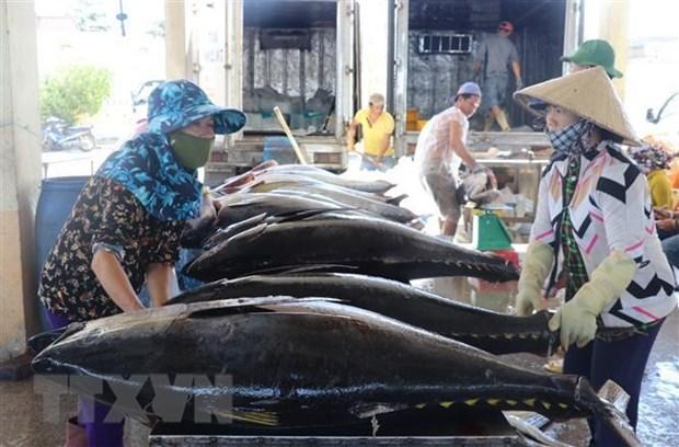 四月份金枪鱼出口增长50% hinh anh 1