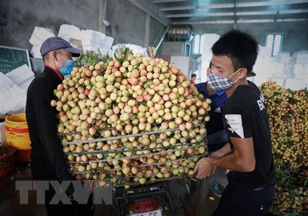 政府总理指示为北江省农产品销售营造最便利条件 hinh anh 1