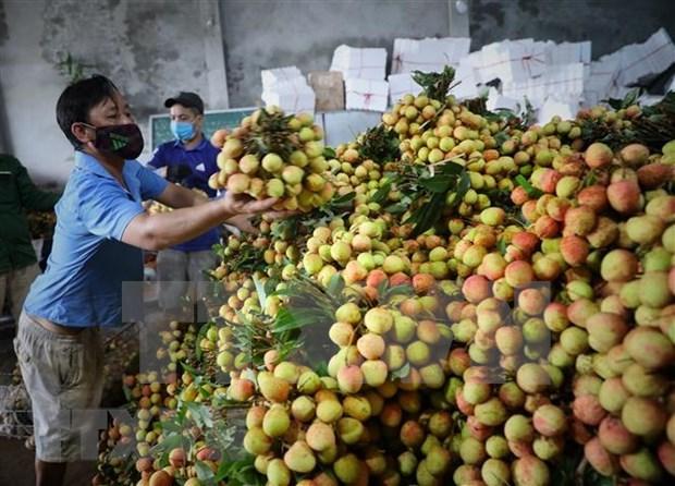 新冠肺炎疫情:市场管理总局实施农产品销售支持计划 hinh anh 1