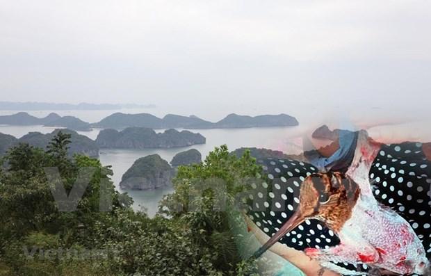 越南力争实现生态系统恢复的目标 hinh anh 1