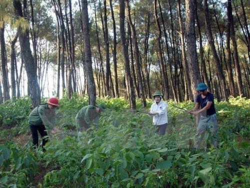 上半年全国新造集中式森林近11万公顷 hinh anh 1