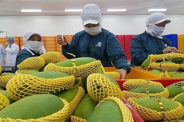 2021年越南果蔬出口额有望突破40亿美元大关 hinh anh 1