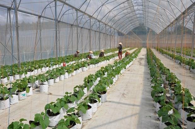 政府总理批准2021-2025年合作社和集体经济发展计划 hinh anh 1