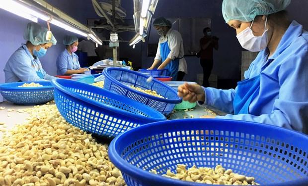 越南继续成为俄罗斯第一大腰果供应国 hinh anh 1