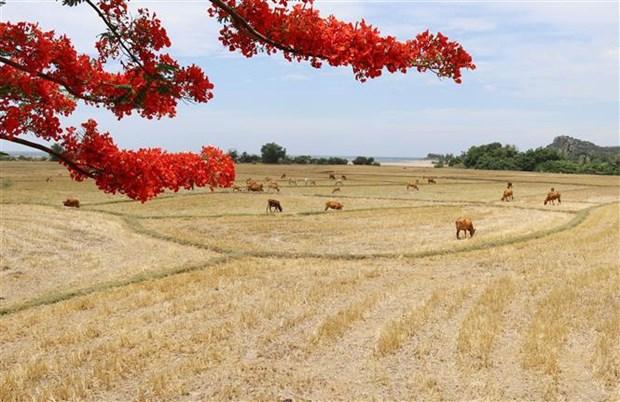 越南主山和昆何农正式列为世界生物圈保护区 hinh anh 2
