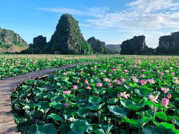 组图:宁平省在秋季盛开的荷花池令人惊叹 hinh anh 1
