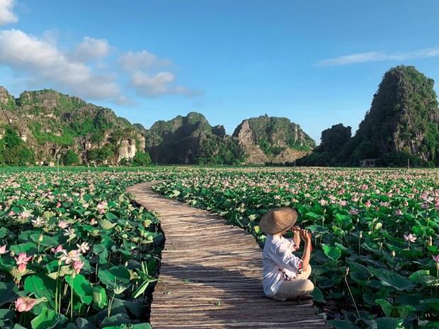组图:宁平省在秋季盛开的荷花池令人惊叹 hinh anh 10