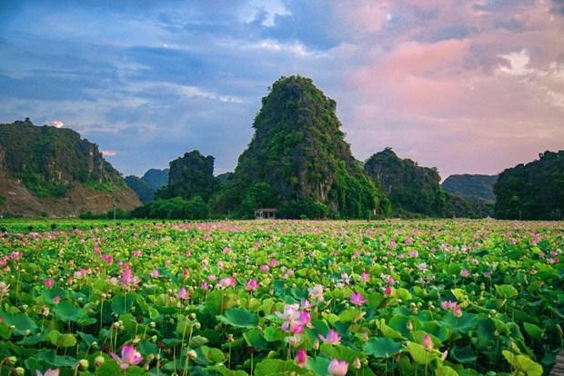 组图:宁平省在秋季盛开的荷花池令人惊叹 hinh anh 13