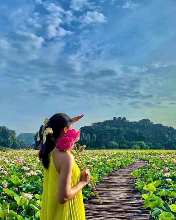 组图:宁平省在秋季盛开的荷花池令人惊叹 hinh anh 7