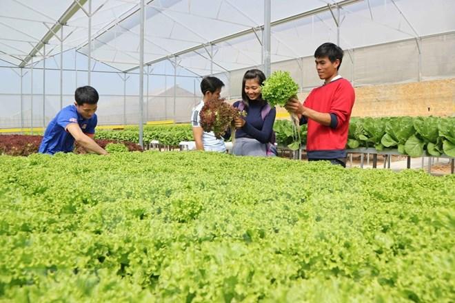 越南农业力争2030年跻身世界15个最发达国家之列