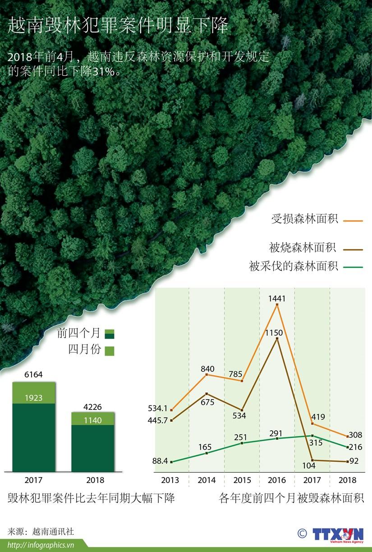 图表新闻:越南毁林犯罪案件明显下降 hinh anh 1