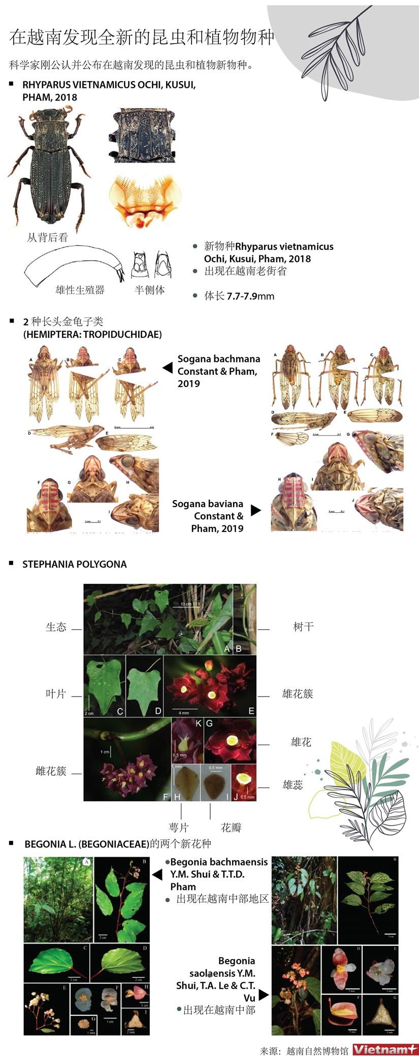 图表新闻:在越南发现全新的昆虫和植物物种 hinh anh 1