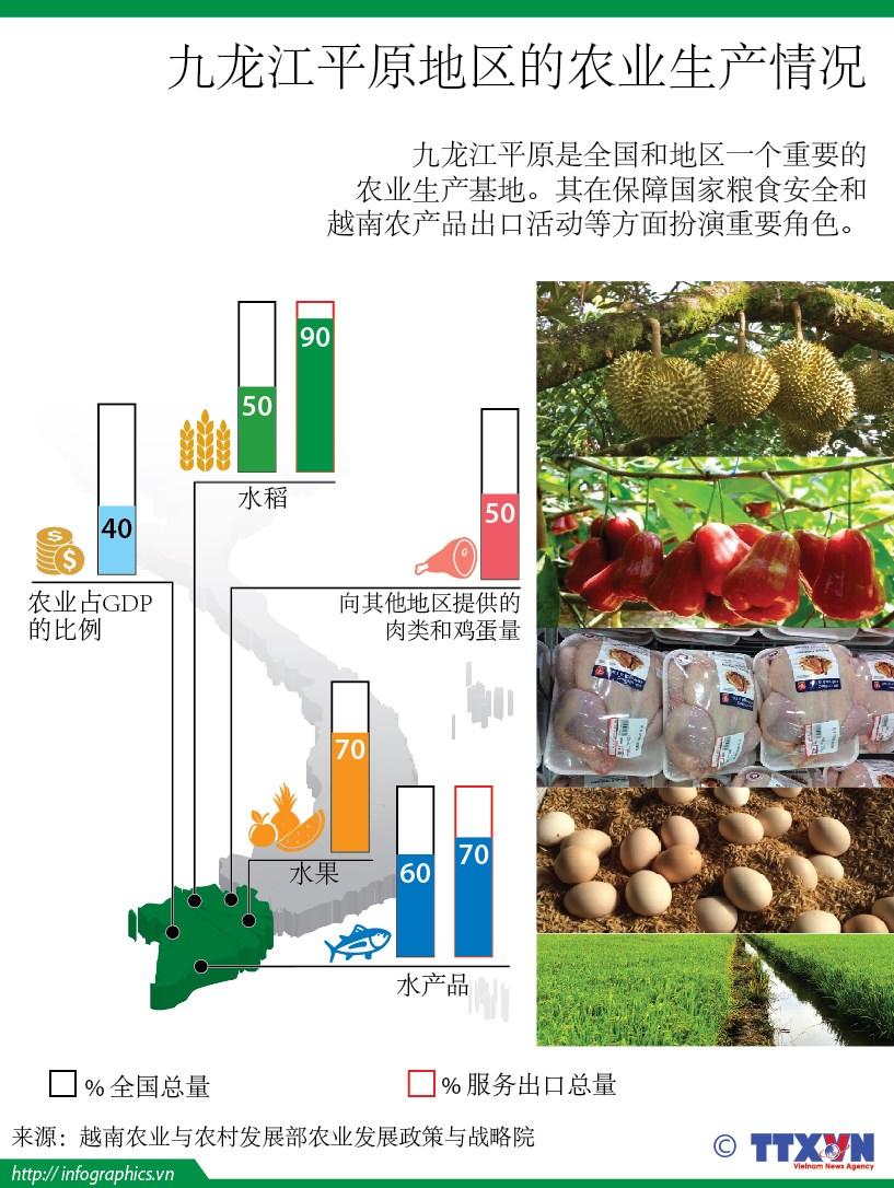 九龙江平原地区的农业生产情况 hinh anh 1