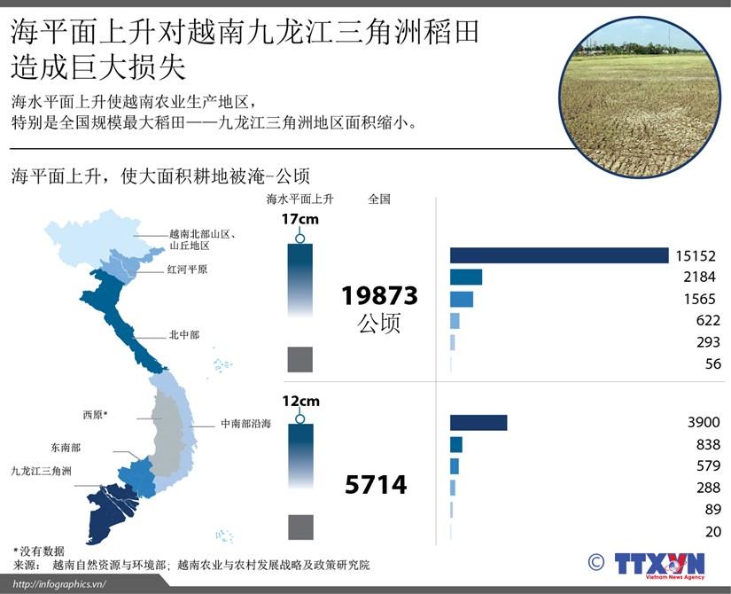 海平面上升对越南九龙江三角洲稻田造成巨大损失 hinh anh 1