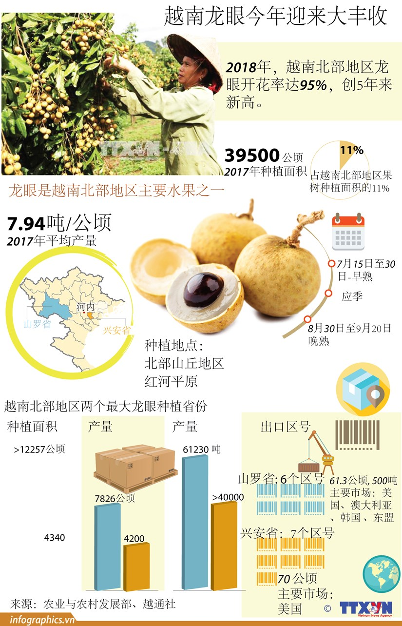 图表新闻:越南龙眼今年迎来大丰收 hinh anh 1