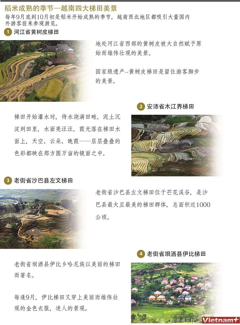 图表新闻:稻米成熟的季节—越南四大梯田美景 hinh anh 1