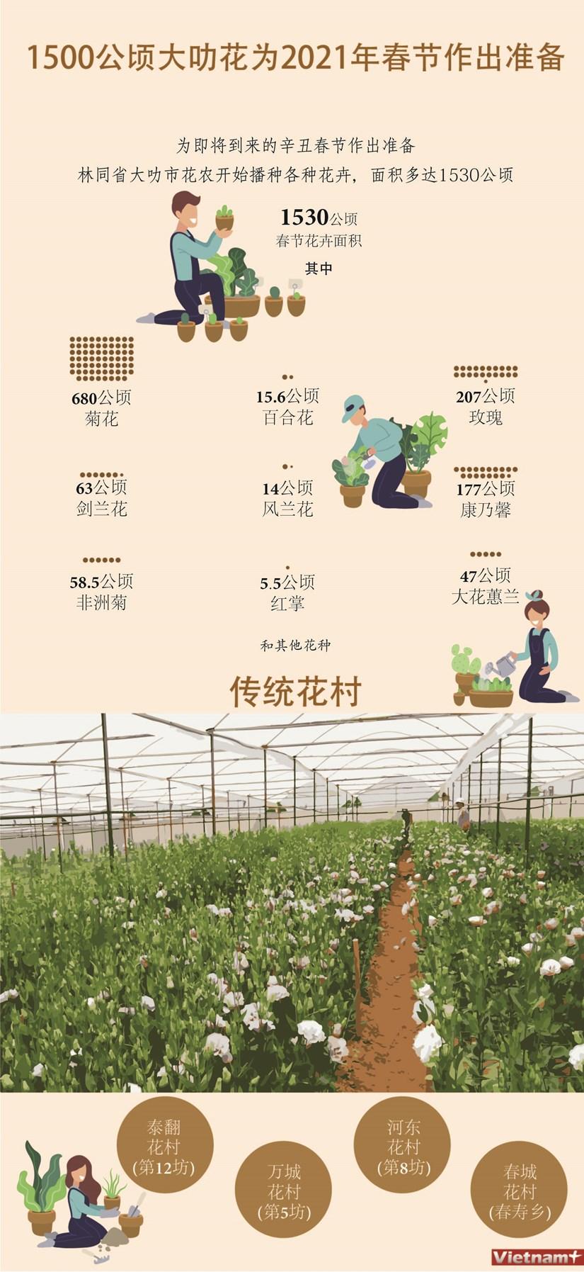 图表新闻:1500公顷大叻花为2021年春节作出准备 hinh anh 1