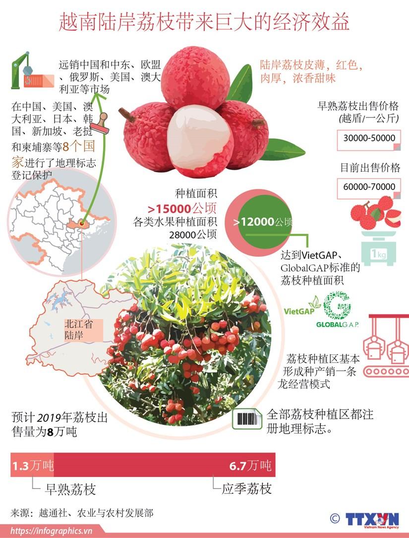 图表新闻:越南陆岸荔枝带来巨大的经济效益 hinh anh 1