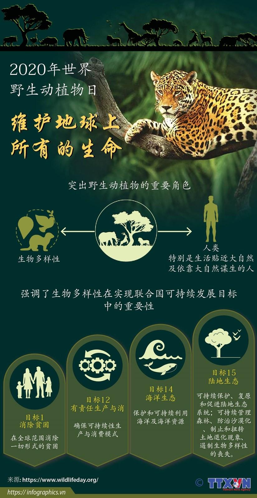 图表新闻:2020年世界野生动植物日:维护地球上所有的生命 hinh anh 1