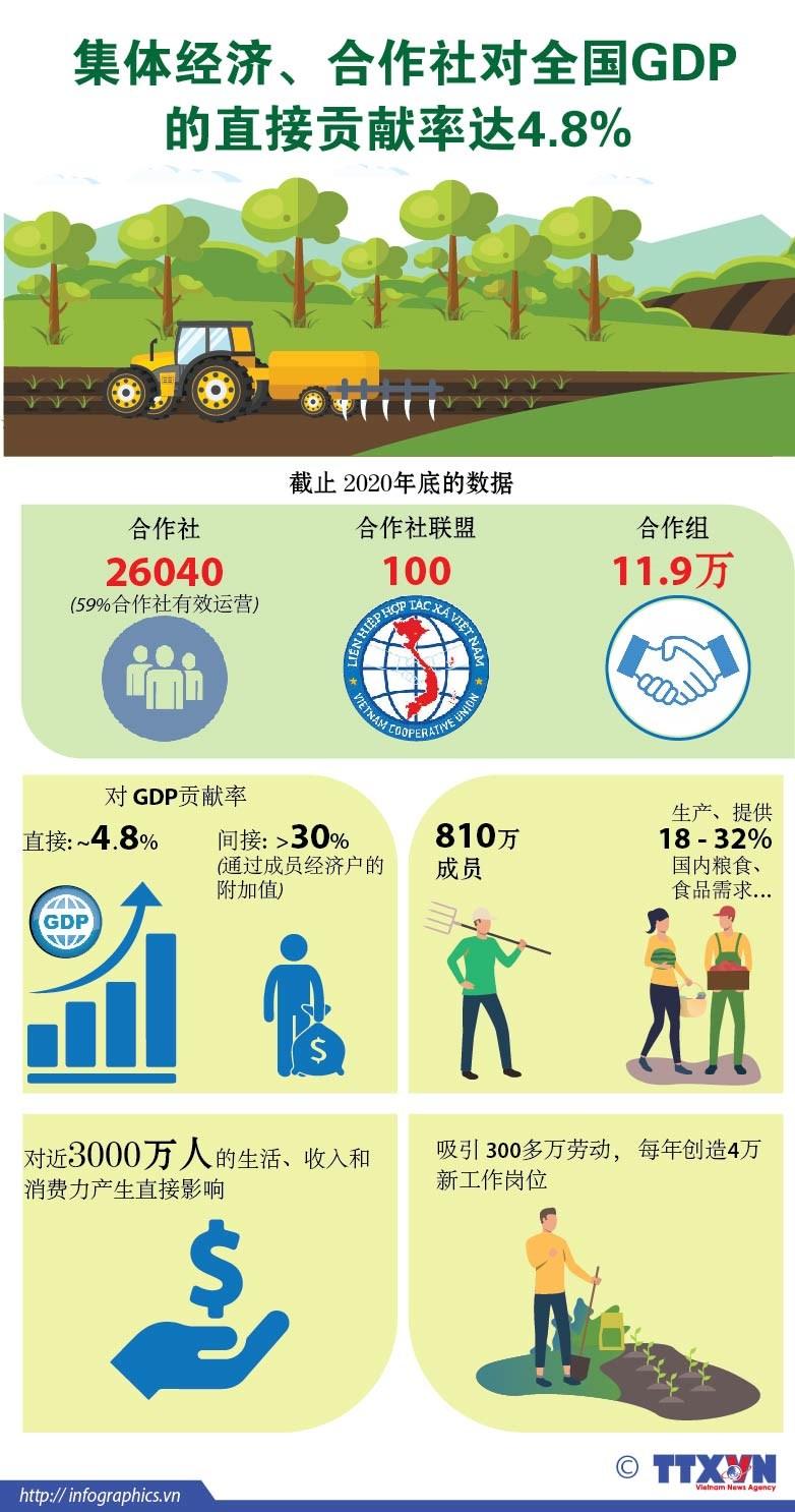 图表新闻:集体经济、合作社对全国GDP的直接贡献率达4.8% hinh anh 1
