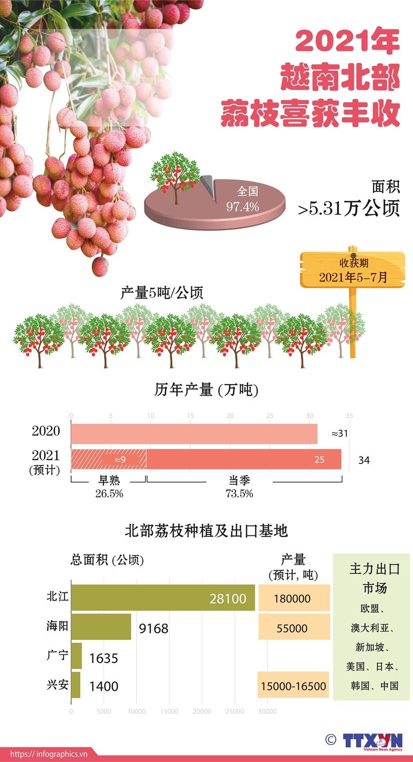 图表新闻:2021年越南北部荔枝喜获丰收 hinh anh 1
