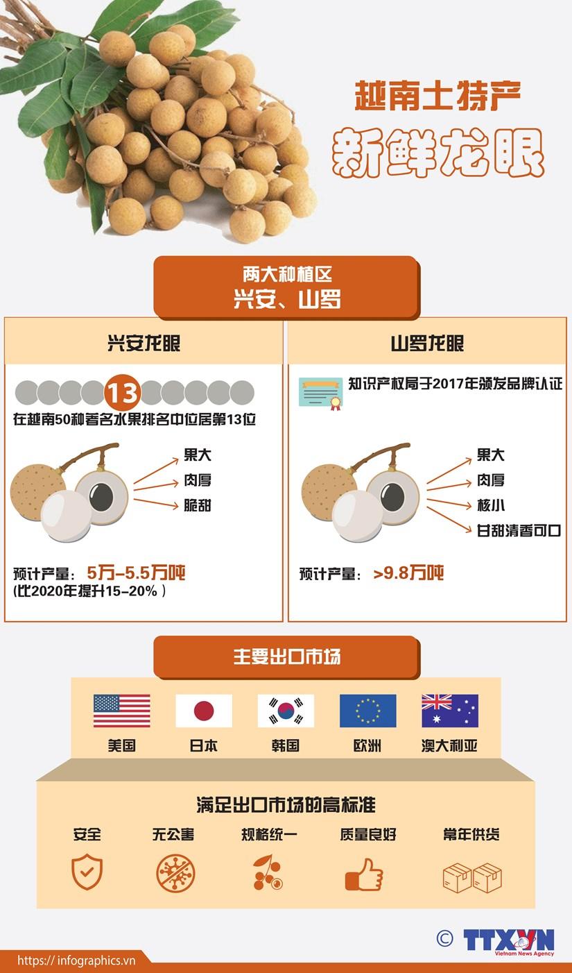 图表新闻:越南土特产——新鲜龙眼 hinh anh 1